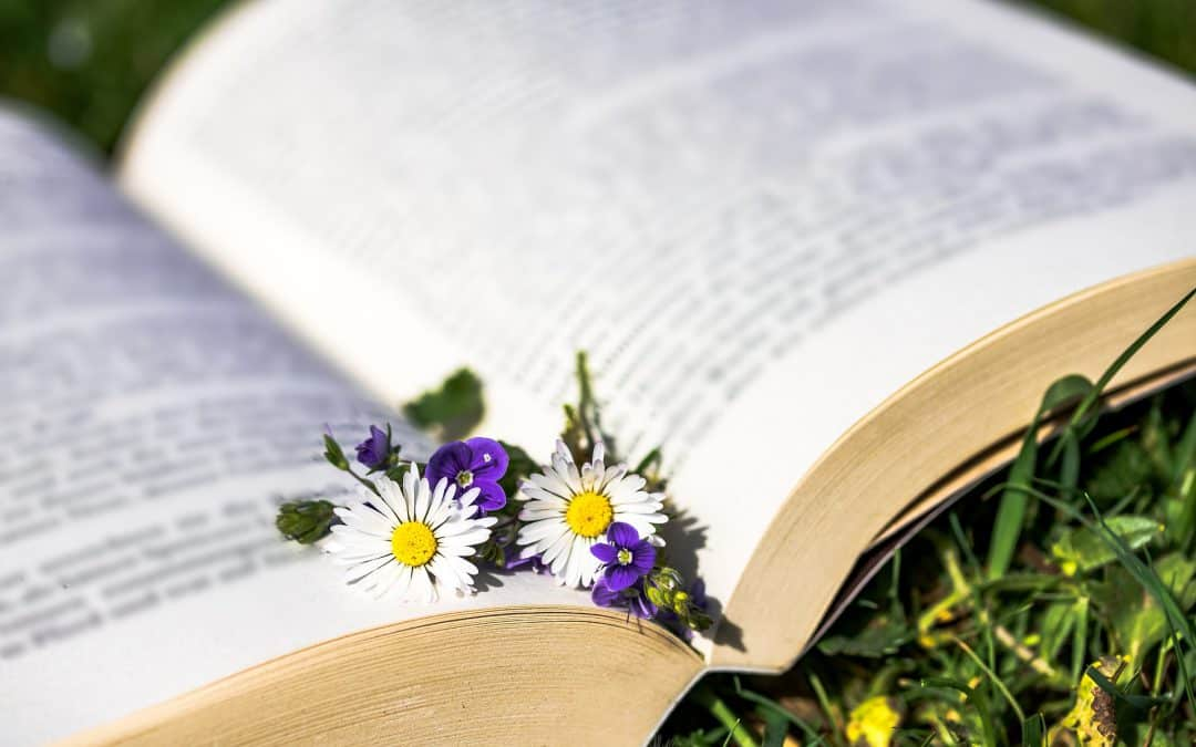 """Vortrag """"Chronische Erkrankungen mit einheimischen Pflanzen behandeln:"""